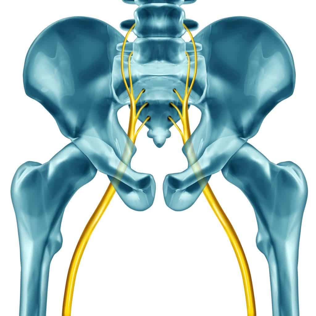 3D image of the sciatic nerve