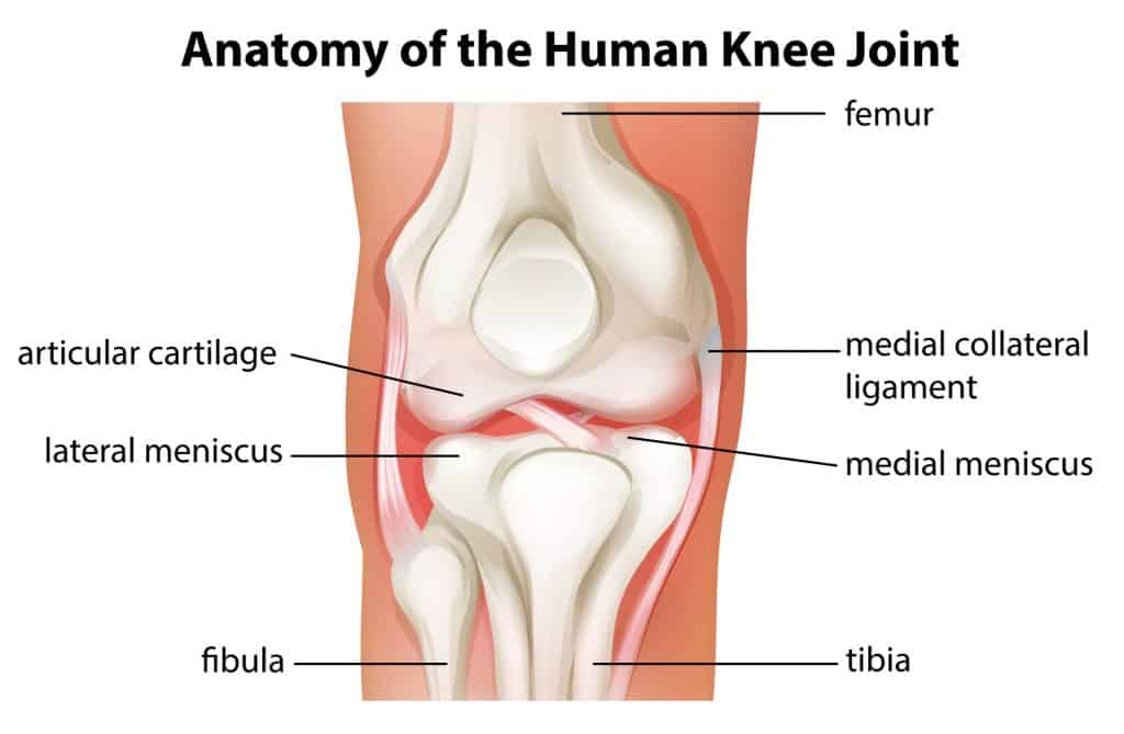 anatomy of the knee joint in an article about knee support for yoga